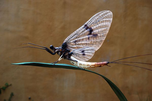 3D printed mayfly by Klaus Leitl