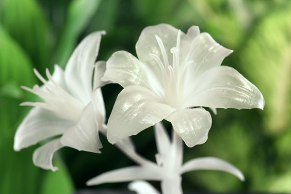 Lilies by Will Walker printed in White Resin