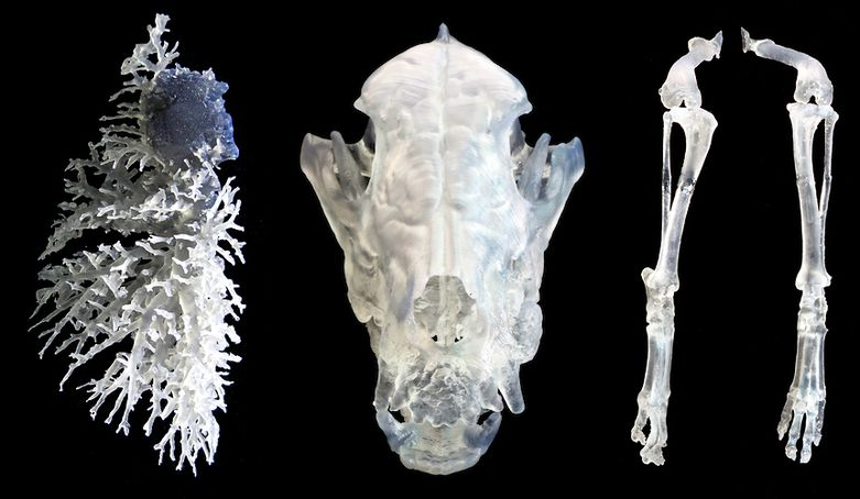 3D Printed Veterinary Surgical Guides