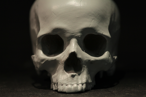 skull: Robert Vignone finished this skull model by lightly priming it to highlight areas for sanding.