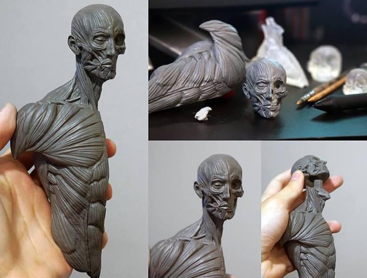 écorché sculpt