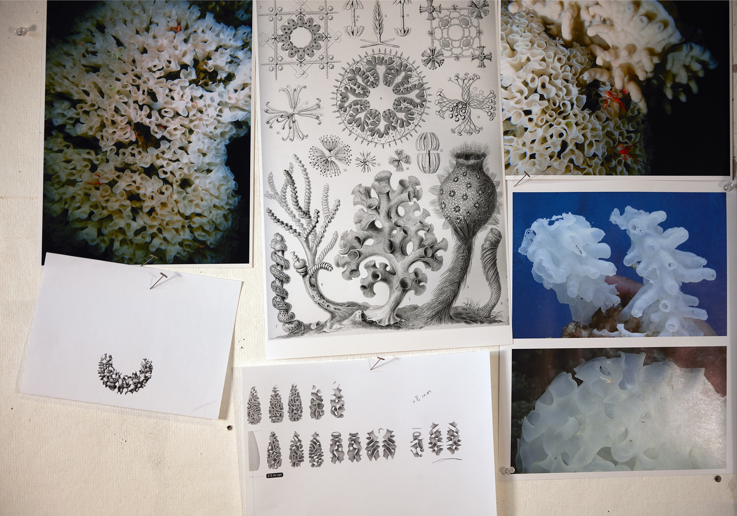 Images of deep sea sponders and drawings of jewelry concepts on the wall at the Nervous System studio.